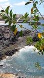 Tenerife grandcanaria Arkivfoton