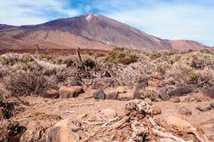 Tenerife, Isole Canarie, Spagna Fotografie Stock