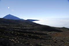 Tenerife kanariefågelöar Arkivbild