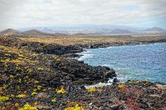 Tenerife. Landscape of montana amarilla region Royalty Free Stock Photo