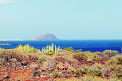 Tenerife. Landscape of montana amarilla region Stock Photos
