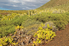 Tenerife landscape Royalty Free Stock Photos