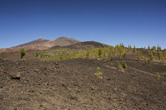 Tenerife landscape Stock Photography