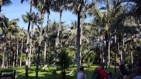 Tenerife Loro Parque Palmiers Royaltyfria Foton