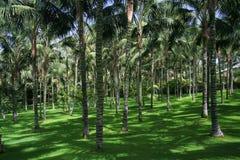 Tenerife Loro Parque - palmy Zdjęcia Stock