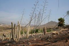 Tenerife Los Cristianos πάρκο Αμαζονία Στοκ φωτογραφίες με δικαίωμα ελεύθερης χρήσης