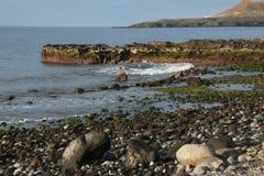 Tenerife, scena intorno a Playa Colmenares, cactus e paesaggio Fotografia Stock Libera da Diritti