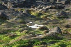 Tenerife, scena intorno a Playa Colmenares, cactus e paesaggio Immagini Stock Libere da Diritti