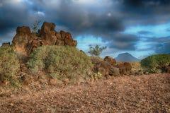 Tenerife, scena wokoło Playa Colmenares, kaktusy i krajobraz, zdjęcie royalty free