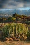Tenerife, scena wokoło Playa Colmenares, kaktusy i krajobraz, obrazy royalty free