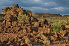 Tenerife, scena wokoło Playa Colmenares, kaktusy i krajobraz, fotografia stock