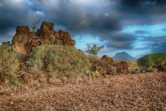 Tenerife, scene around Playa Colmenares, Cacti and landscape royalty free stock photo