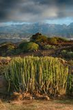 Tenerife, scene around Playa Colmenares, Cacti and landscape royalty free stock images