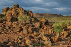 Tenerife, scene around Playa Colmenares, Cacti and landscape stock photography