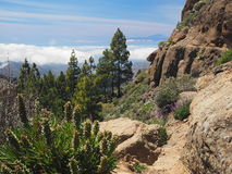 Tenerife seen from high mountain next to Roque Nublo Royalty Free Stock Image