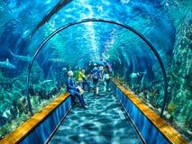 Tenerife, SPAGNA - 3 FEBBRAIO 2019: Tunnel acquatico con gli squali e vita marina nel parco Loro Parque, Tenerife di Loro fotografie stock libere da diritti