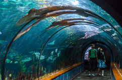 TENERIFE, SPAIN - NOVEMBER 19, 2015:  Aquatic tunnel in the Loro Royalty Free Stock Photo