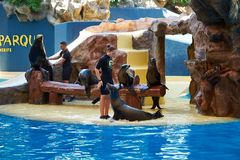 Sea Lion Show in Loro Park.Loro Parque. Tenerife,Spain stock images