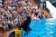 Sea Lion Show in Loro Park.Loro Parque. Tenerife,Spain stock photography