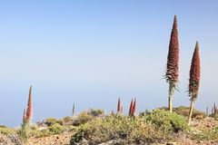 Tenerife - Teide national park Royalty Free Stock Photos
