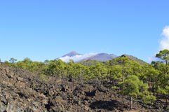 Tenerife Royalty Free Stock Photo