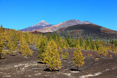 Tenerife volcano landscape Royalty Free Stock Photography