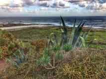 Tenerife, wild coast in Hidalgo Royalty Free Stock Images