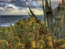 Tenerife, wild coast in Hidalgo Royalty Free Stock Photo