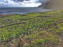 Tenerife, wild coast in Hidalgo Stock Photos
