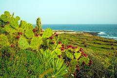Tenerife wild coast in Hidalgo Stock Photo