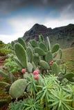 Tenerife, wyspy kanaryjska, Hiszpania - droga na panorami i wybrzeżu zdjęcia royalty free