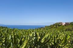 Teneriffa - Bananen-Felder, Ozean und blauer Himmel lizenzfreies stockfoto