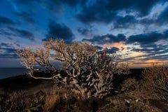 Teneriffa-Landschaft - Costa Adeje-Sonnenuntergang Lizenzfreie Stockfotos