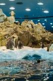 TENERIFFA, SPANIEN - 19. NOVEMBER 2015: Pinguine auf dem künstlichen Lizenzfreies Stockfoto