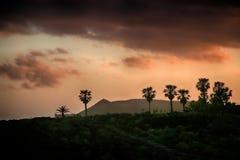 Teneriffa, Szene um Playa Colmenares, Kakteen und Landschaft stockfotos