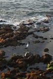 Teneriffa, Szene um Playa Colmenares, Kakteen und Landschaft stockbilder