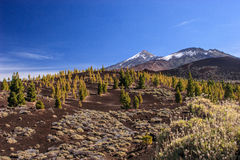 Teneriffe - Teide Royalty Free Stock Images