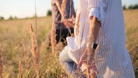 Tenersi per mano di camminata delle coppie nel campo di erba video d archivio
