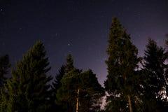Tenez le premier rôle le ciel vu de la forêt avec la lumière de ville photographie stock libre de droits