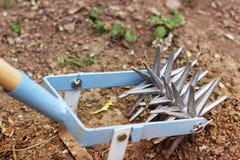 Tenez le premier rôle le cultivateur de main pour travailler le sol, sarclez le jardin images libres de droits