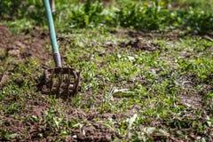 Tenez le premier rôle le cultivateur de main pour travailler le sol, sarclez le jardin Le concentré photo stock