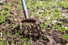Tenez le premier rôle le cultivateur de main pour travailler le sol, sarclez le jardin Le concentré image stock