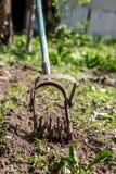 Tenez le premier rôle le cultivateur de main pour travailler le sol, sarclez le jardin Le concentré photos libres de droits