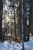 Tenez-vous dans une forêt photo libre de droits