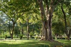 Tenga la calma ed ami l'albero Fotografie Stock
