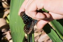 Tenga la farfalla di Brown Fotografia Stock Libera da Diritti