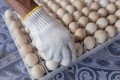 Tenga le uova in azienda agricola Immagine Stock
