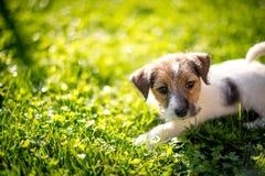 Tenga un nuevo perrito Fotos de archivo libres de regalías