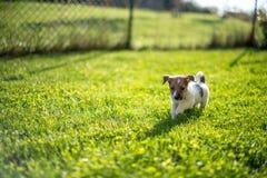 Tenga un nuevo perrito Fotografía de archivo libre de regalías