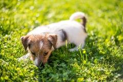 Tenga un nuevo perrito Fotos de archivo